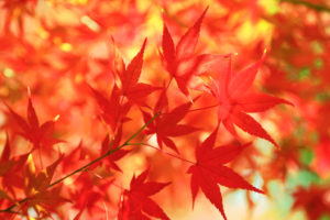 autumn-leaves_00001